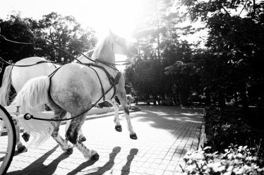 Fotografie realizată de Adi Hadade  - #1556128